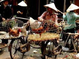 Vietnam Bike Export Slipping